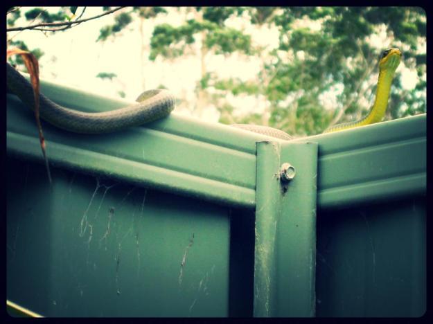 Tree snake 2