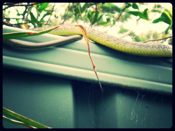tree snake 4