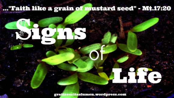 Faith like a grain of mustard seed
