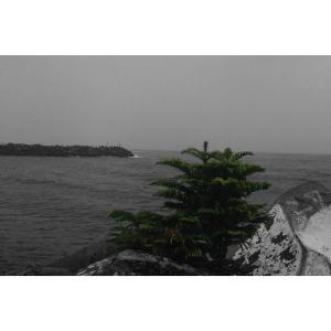 Tree on a rock 2